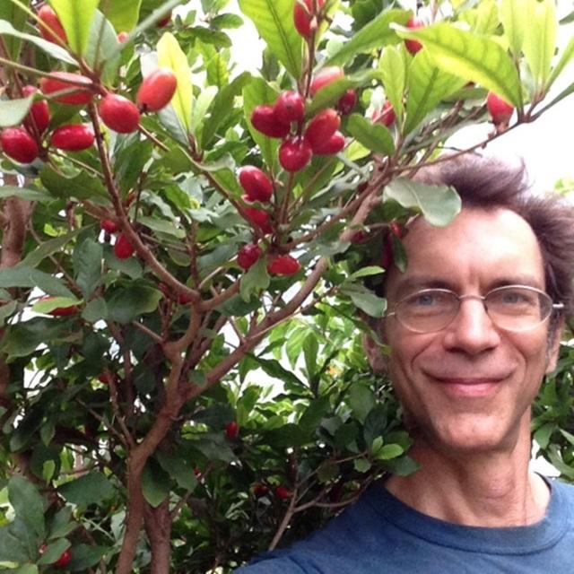 Trái lạ có khả năng thần kỳ, trước là cây dại nay có giá 1,6 triệu đồng/kg - 6
