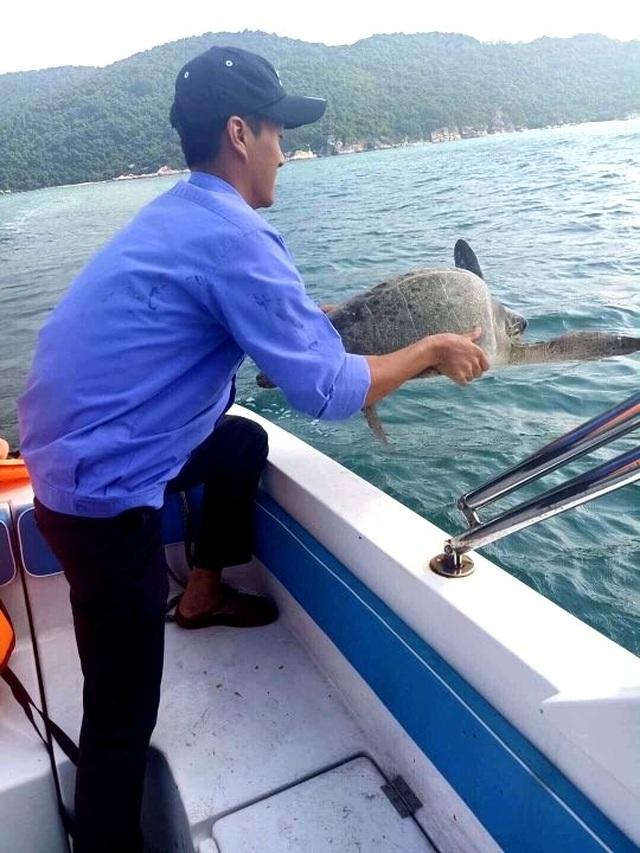 Thả rùa xanh quý hiếm về biển