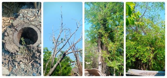 Diễn tiến lạ trong vụ chặt cây trên đất đã mua, nguy cơ bị ngồi tù tại Kiên Giang - 3