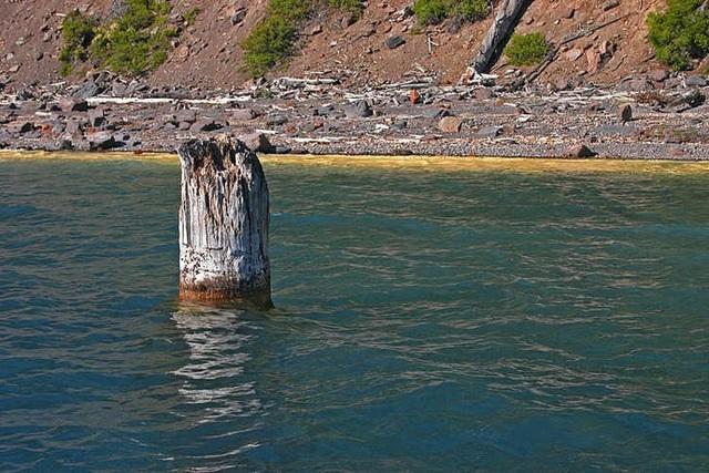 """Khúc gỗ """"thách thức"""" mọi định luật vật lý, nổi trên mặt nước suốt trăm năm không phân hủy - 2"""