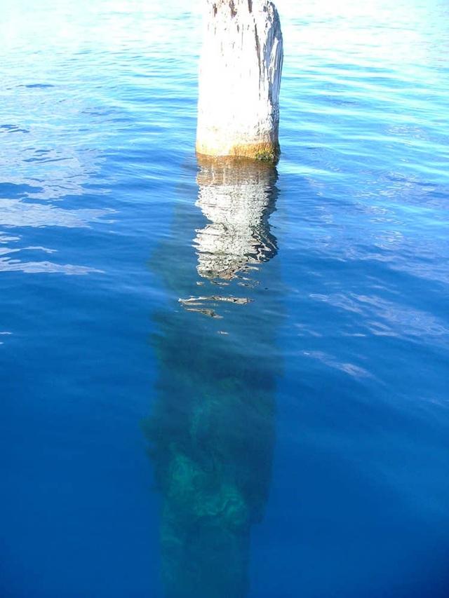 """Khúc gỗ """"thách thức"""" mọi định luật vật lý, nổi trên mặt nước suốt trăm năm không phân hủy - 3"""