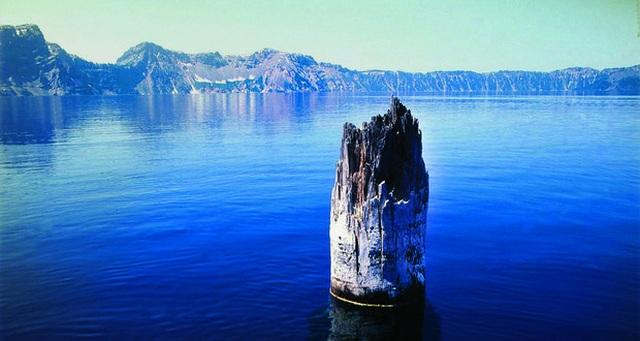 """Khúc gỗ """"thách thức"""" mọi định luật vật lý, nổi trên mặt nước suốt trăm năm không phân hủy - 4"""