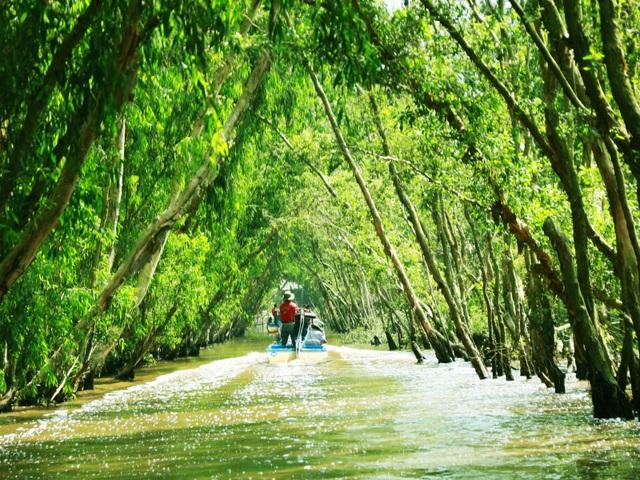 Màu xanh mê hoặc của rừng tràm Trà Sư mùa nước nổi - 9