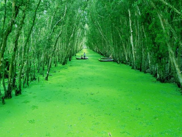 Màu xanh mê hoặc của rừng tràm Trà Sư mùa nước nổi - 7