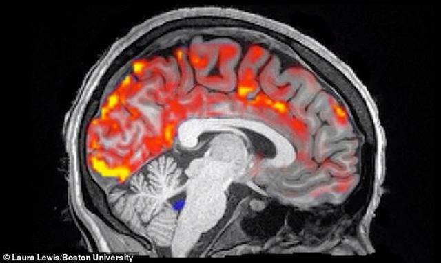 Cách sung sướng' giúp loại bỏ chất độc gây bệnh nan y trong não - 2