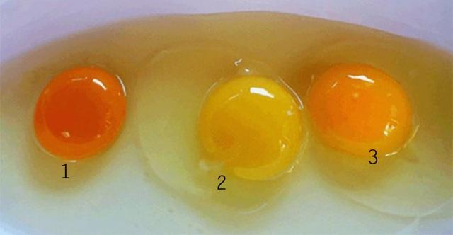 Lòng đỏ trứng gà có cho bạn biết gì về giá trị dinh dưỡng không? - 1