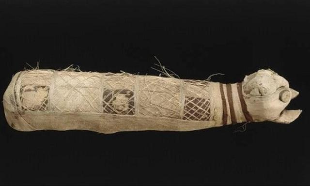 Phát hiện xác ướp mèo kỳ lạ hàng nghìn năm tuổi có 5 chân, 3 đuôi - 1