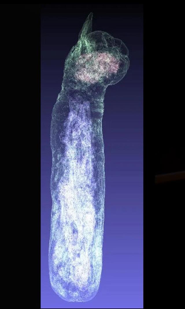 Phát hiện xác ướp mèo kỳ lạ hàng nghìn năm tuổi có 5 chân, 3 đuôi - 2