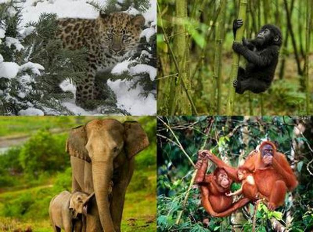 8 triệu học sinh tiểu học sẽ được học về  bảo tồn động vật hoang dã nguy cấp - 2