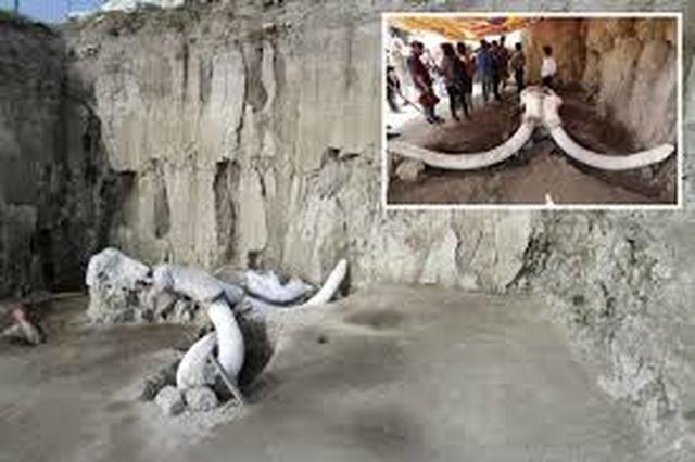 Tìm thấy hố bẫy voi ma mút của người cổ đại - 1