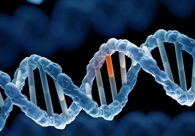 Gen sinh ung thư mới được phát hiện - 2