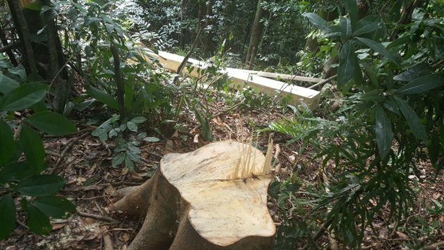 Trưởng phòng bảo vệ rừng bị kẻ lạ mặt hành hung tại trụ sở - 1