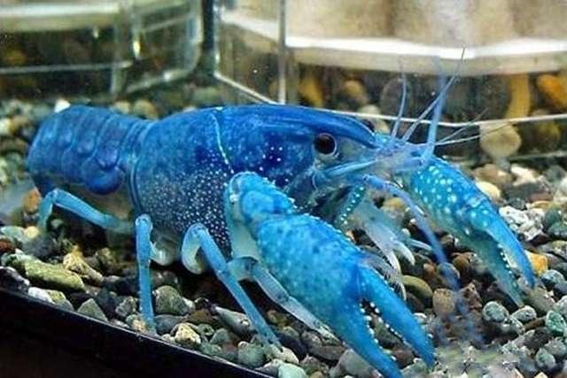 """""""Choáng"""" với những loại hải sản đắt nhất thế giới  - 5"""