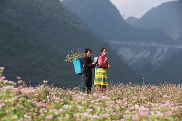Có gì đặc biệt ở Lễ hội hoa tam giác mạch 2019 ở Hà Giang? - 1