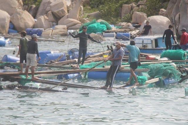 Khánh Hòa cưỡng chế dân trên lồng bè vào bờ trước khi bão đổ bộ - 1