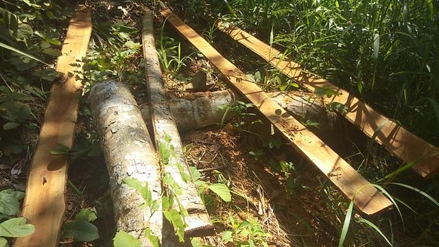 Chuyển cơ quan điều tra vụ BQL rừng để mất hơn 1.400ha rừng - 2