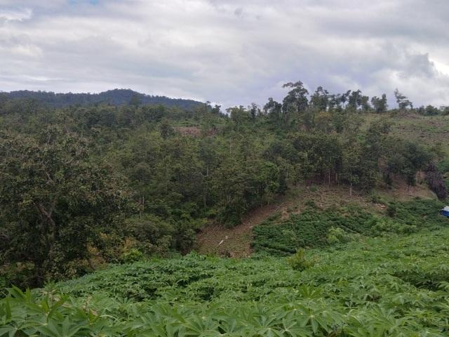 Chuyển cơ quan điều tra vụ BQL rừng để mất hơn 1.400ha rừng - 1
