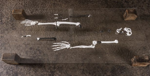 Phát hiện hài cốt của loài vượn bí ẩn với đôi chân giống người - 4