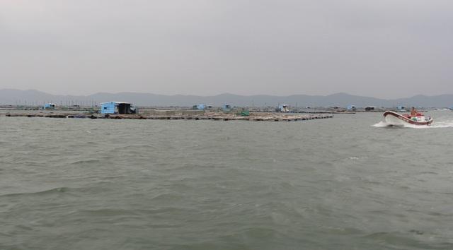 Quảng Ngãi đang mưa to gió mạnh, Phú Yên lo dân cố thủ giữ lồng bè - 5