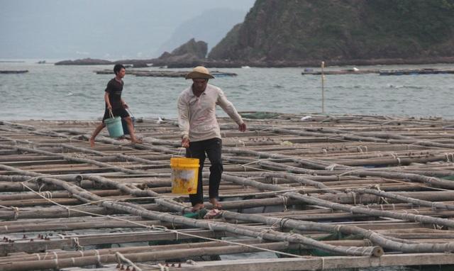 Quảng Ngãi đang mưa to gió mạnh, Phú Yên lo dân cố thủ giữ lồng bè - 6
