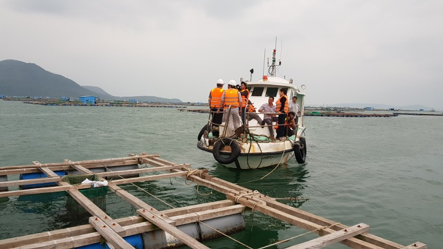 Quảng Ngãi đang mưa to gió mạnh, Phú Yên lo dân cố thủ giữ lồng bè - 8