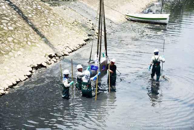Tháo dỡ hệ thống làm sạch sông Tô Lịch, di chuyển đàn cá Koi sang Hồ Tây - 4
