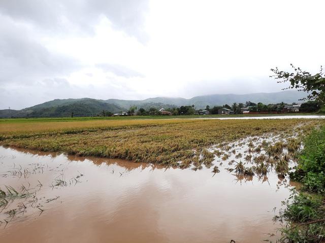 Đắk Lắk: Trên 400 nhà dân và 2.600 héc ta hoa màu bị chìm trong biển nước - 2