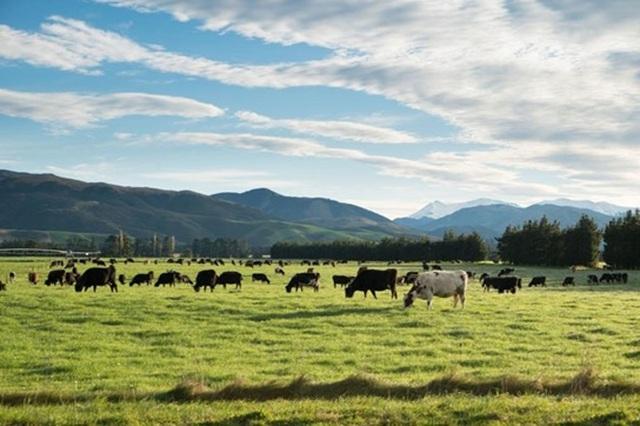 """Traphaco """"lấn sân"""", chính thức phân phối dòng sữa New Zealand Gold tại Việt Nam - 2"""