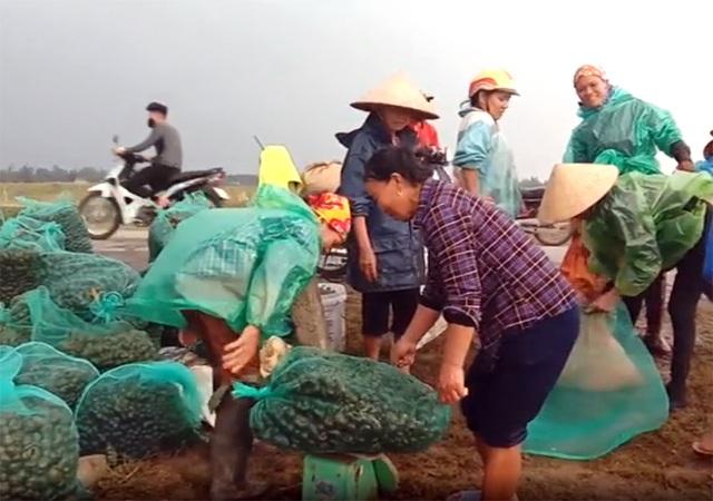Nông dân đổ xô đi bắt ốc bươu vàng hại lúa, thu lợi hàng triệu đồng - 3