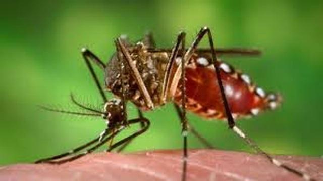 50 người tử vong vì sốt xuất huyết, dịch tăng cao - 1
