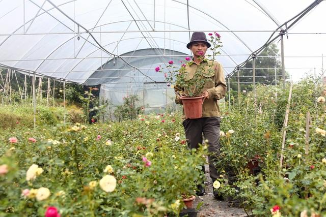 Bỏ phố về quê trồng hoa hồng, 8x thu 300 triệu đồng mỗi năm - 10
