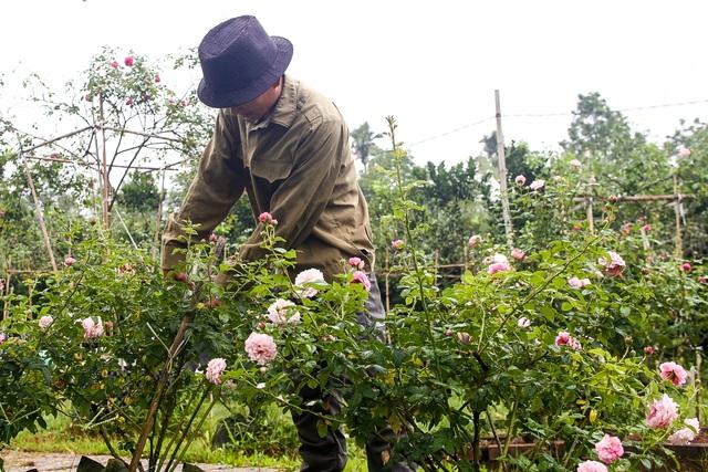 Bỏ phố về quê trồng hoa hồng, 8x thu 300 triệu đồng mỗi năm - 15