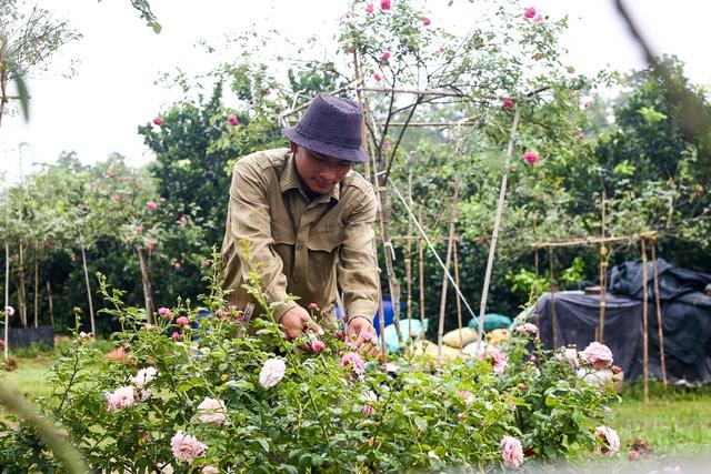 Bỏ phố về quê trồng hoa hồng, 8x thu 300 triệu đồng mỗi năm - 3