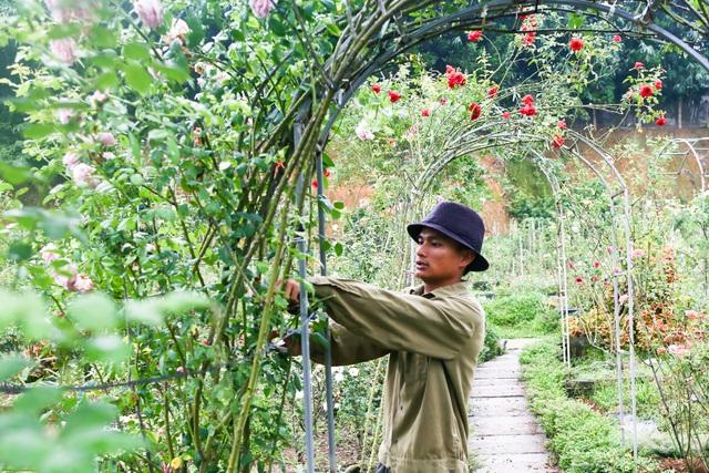 Bỏ phố về quê trồng hoa hồng, 8x thu 300 triệu đồng mỗi năm - 14