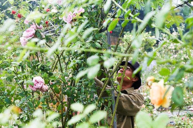 Bỏ phố về quê trồng hoa hồng, 8x thu 300 triệu đồng mỗi năm - 6