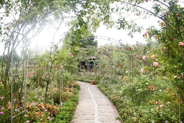 Bỏ phố về quê trồng hoa hồng, 8x thu 300 triệu đồng mỗi năm - 1