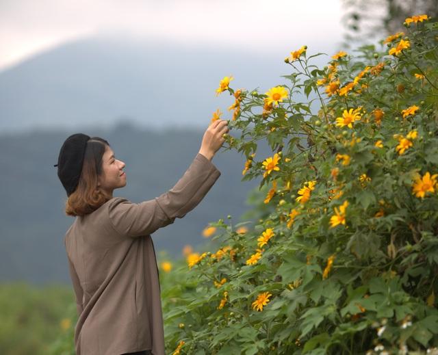 Du khách nườm nượp về miền Tây Quảng Trị thưởng thức vẻ đẹp hoa dã quỳ - 8