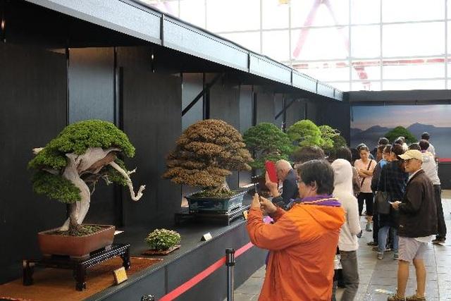 Lễ hội Bonsai  Suiseki Châu Á - Thái Bình Dương tại Suối Tiên - 2