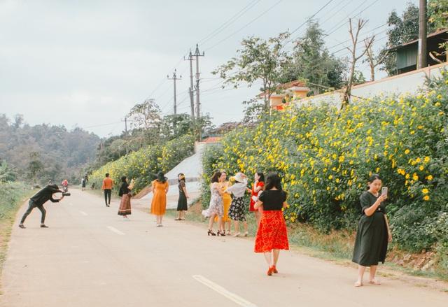 Du khách nườm nượp về miền Tây Quảng Trị thưởng thức vẻ đẹp hoa dã quỳ - 7