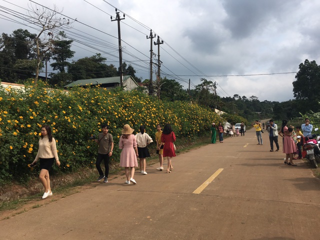 Du khách nườm nượp về miền Tây Quảng Trị thưởng thức vẻ đẹp hoa dã quỳ - 3