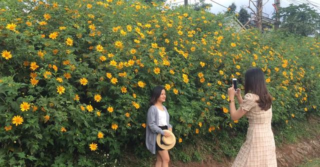 Du khách nườm nượp về miền Tây Quảng Trị thưởng thức vẻ đẹp hoa dã quỳ - 6
