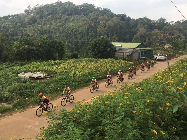 Du khách nườm nượp về miền Tây Quảng Trị thưởng thức vẻ đẹp hoa dã quỳ - 1