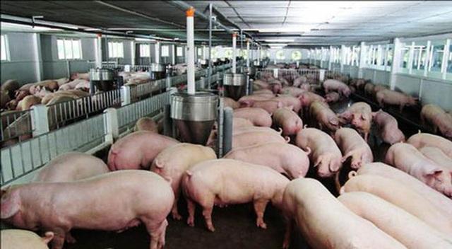 Thịt lợn tăng chưa từng có, do chính dân nuôi thổi giá - 1