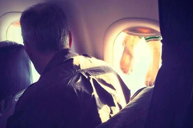 Bất bình với hành khách treo tất lên cửa sổ máy bay để hong khô - 1