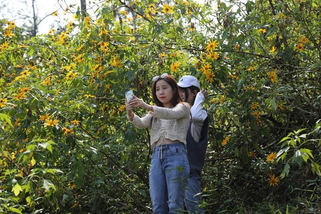 Hoa dã quỳ nở vàng trên núi Ba Vì - 9