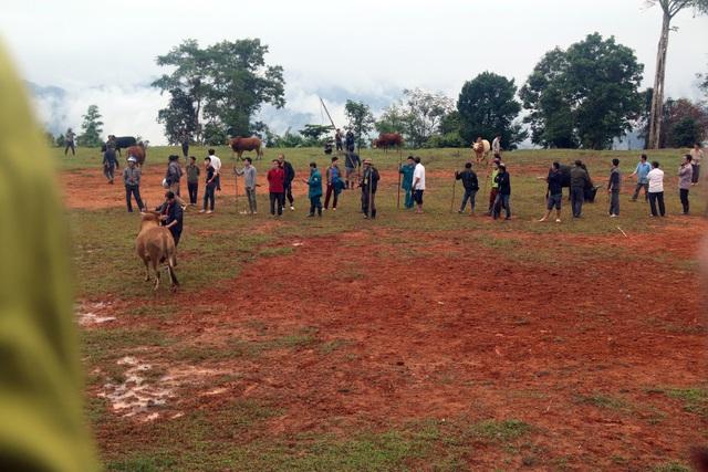 Đặc sắc hội chọi bò người Mông ở miền Tây xứ Nghệ - 1