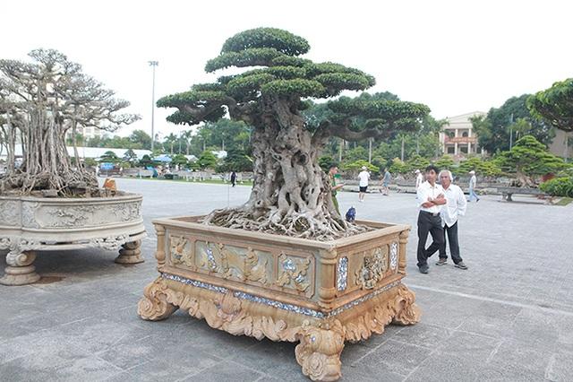 Mua cây sanh cổ quá cao, cắt làm đôi tạo thành 2 cây bán gần 20 tỷ đồng - 10