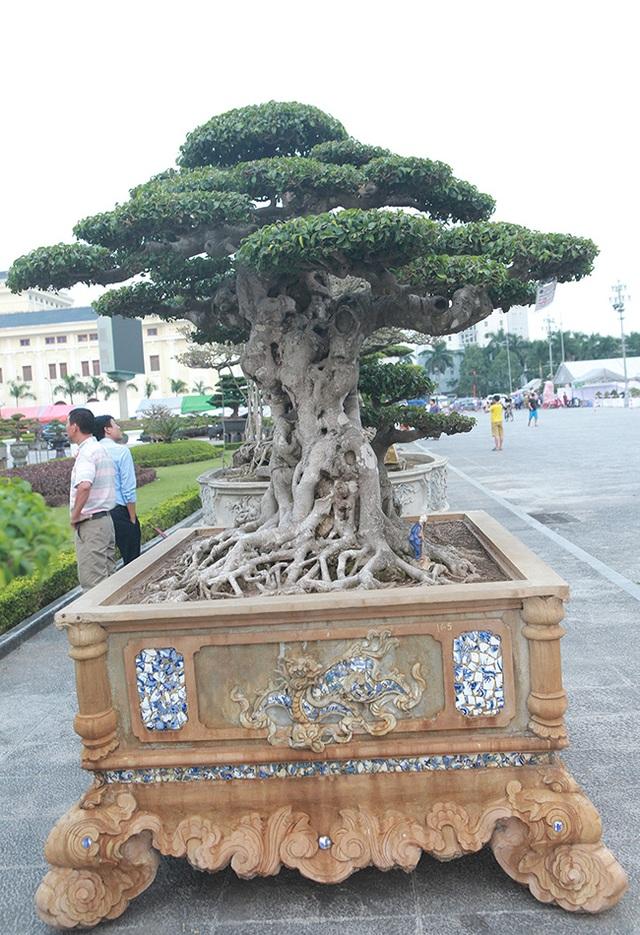 Mua cây sanh cổ quá cao, cắt làm đôi tạo thành 2 cây bán gần 20 tỷ đồng - 12
