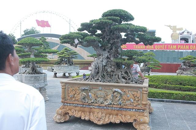 Mua cây sanh cổ quá cao, cắt làm đôi tạo thành 2 cây bán gần 20 tỷ đồng - 13