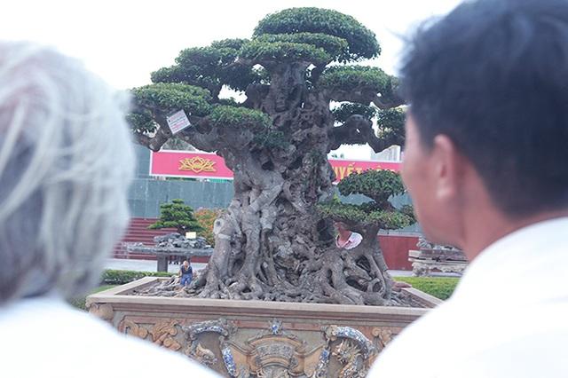 Mua cây sanh cổ quá cao, cắt làm đôi tạo thành 2 cây bán gần 20 tỷ đồng - 14